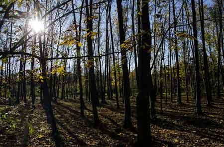 نصب سنسورهای هشدار آتش سوزی در جنگل ها