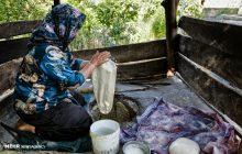 روایت تصویری از زنان زحمت کش روستایی چهاردانگه
