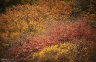 جنگل های هیرکانی شمال در راه ثبت جهانی