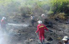 3 هکتار از اراضی میانکاله در آتش سوخت