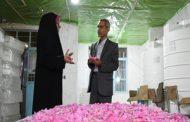 فرآوری 6 تن گلاب از باغ های گل محمدی دودانگه