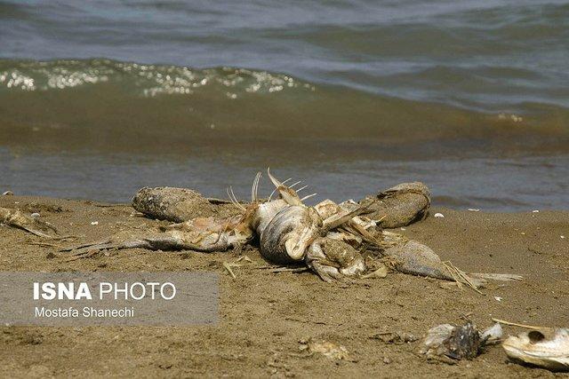 تلف شدن ماهی در ساحل گهرباران + عکس