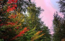 ۶ سایت جنگل های مازندران برای ثبت در یونسکو انتخاب شد