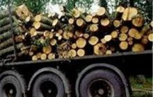 10 تن چوب جنگلی قاچاق در چهاردانگه کشف شد