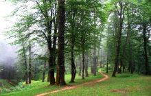 پایان عمر جنگلهای شمال تا 30 سال آینده