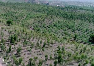 اجرای طرحهای بیولوژیک مراتع در حوزه آبخیز چالوی چهاردانگه
