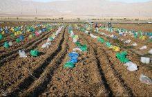 صندوق حمایت از بخش کشاورزی مازندران توانمند شده است