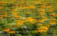 یک میلیون هکتار اراضی کشاورزی جزو موقوفات است
