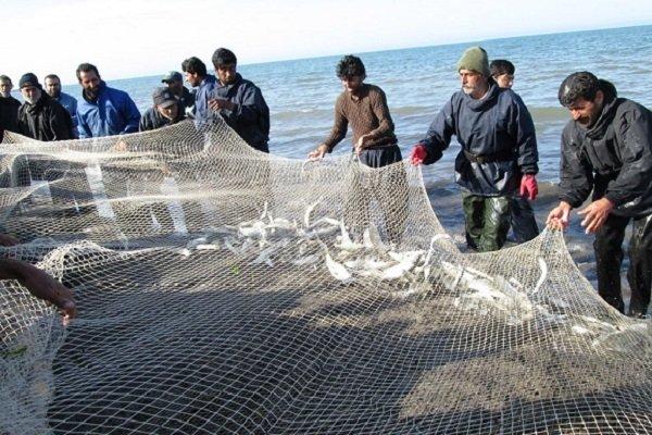 اولین جشنواره ماهی سفید در شیرود برگزار شد