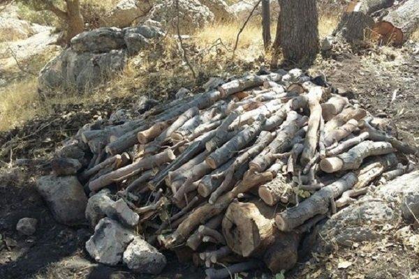 قطع ۸۰۰۰ درخت در جنگل های مازندران/ حفاظت ساماندهی شود