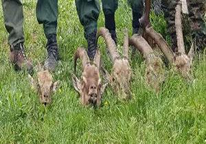 کشف و ضبط یک قبضه سلاح غیر مجاز در قادیکلا/کشف لاشه ۵ رأس کل و بز وحشی از شکارچیان متخلف در نوشهر