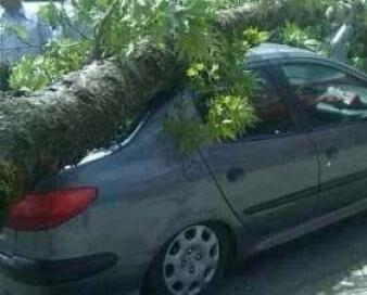 سقوط درخت بر روی خودرو جان یک زن را گرفت