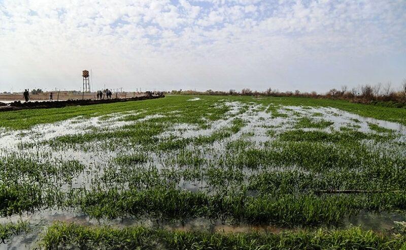 پرداخت کمک بلاعوض و تسهیلات به کشاورزان سیلزده مازندران آغاز شد