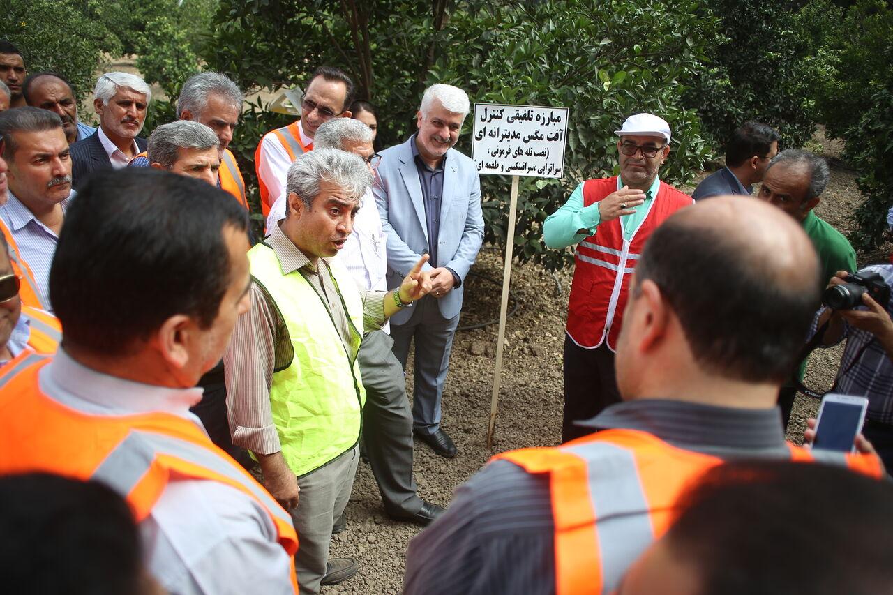 آغاز رزمایش مقابله با آفت مگس میوه در مازندران