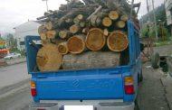 کشف 15 تن چوب جنگلي قاچاق در ساری