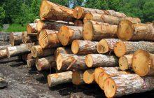 کشف 6 تن چوب قاچاق در بخش چهاردانگه