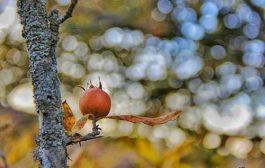 تصاویر: پاییز هزار رنگ چهاردانگه ...