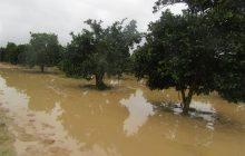 ۳۱ درصد بودجه مصوب کشاورزان سیلزده مازندران جذب شد