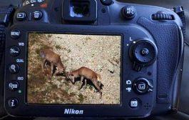 تصاویر زیبا از حیات وحش چهاردانگه از گروه چکاد ساری