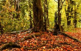 طبیعت زیبایی پاییزی در دودانگه و چهاردانگه