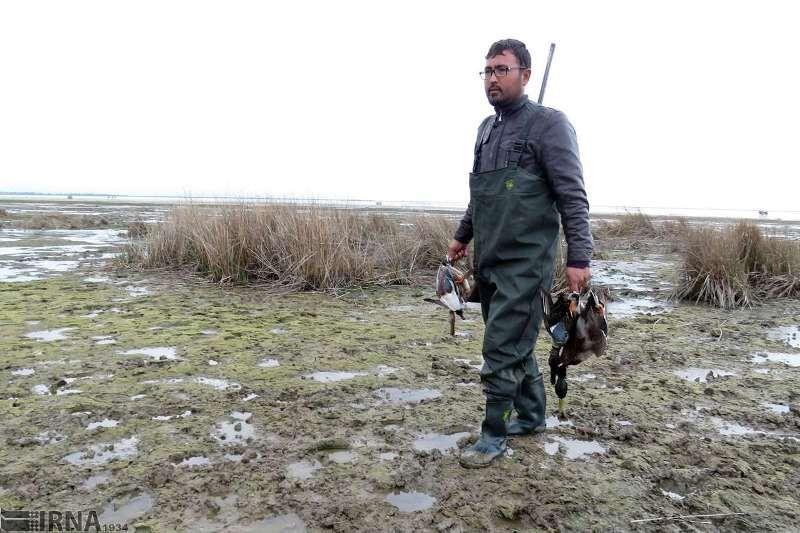 شکار پرندگان در شرق مازندران ممنوع شد
