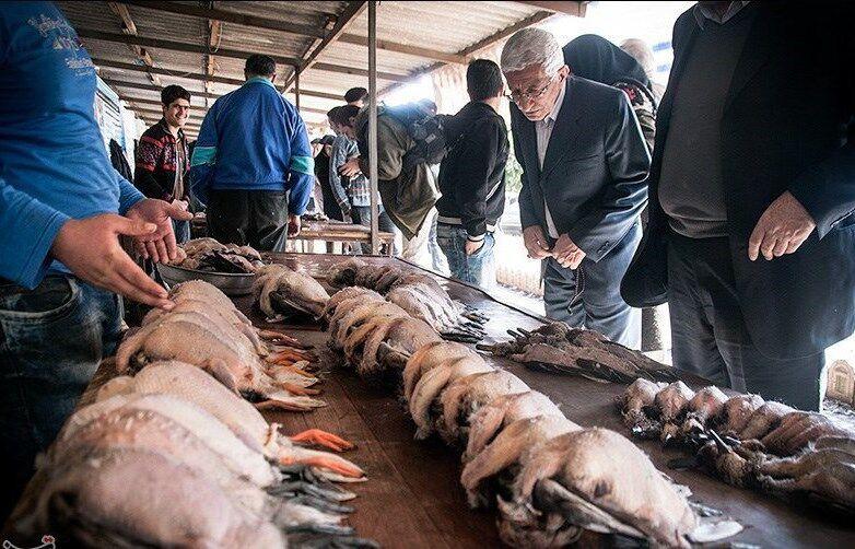مرگ پرندگان مهاجر در مازندران بازار فروش این حیوانات را تعطیل کرد