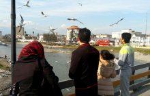 پرندهنگری ؛ جاذبهای گردشگری در رودخانه چشمهکیله تنکابن