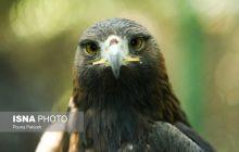 کرونا ویروس پرندگان ارتباطی با کروناویروس چینی ندارد
