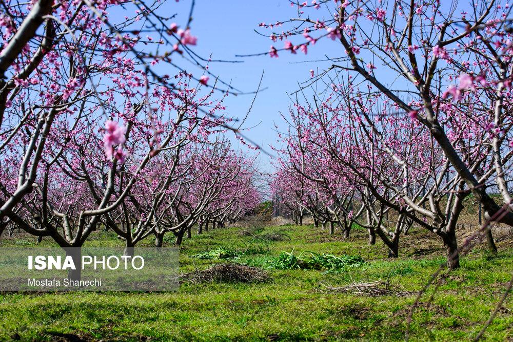 ایسنا - طبیعت بهاری - مازندران