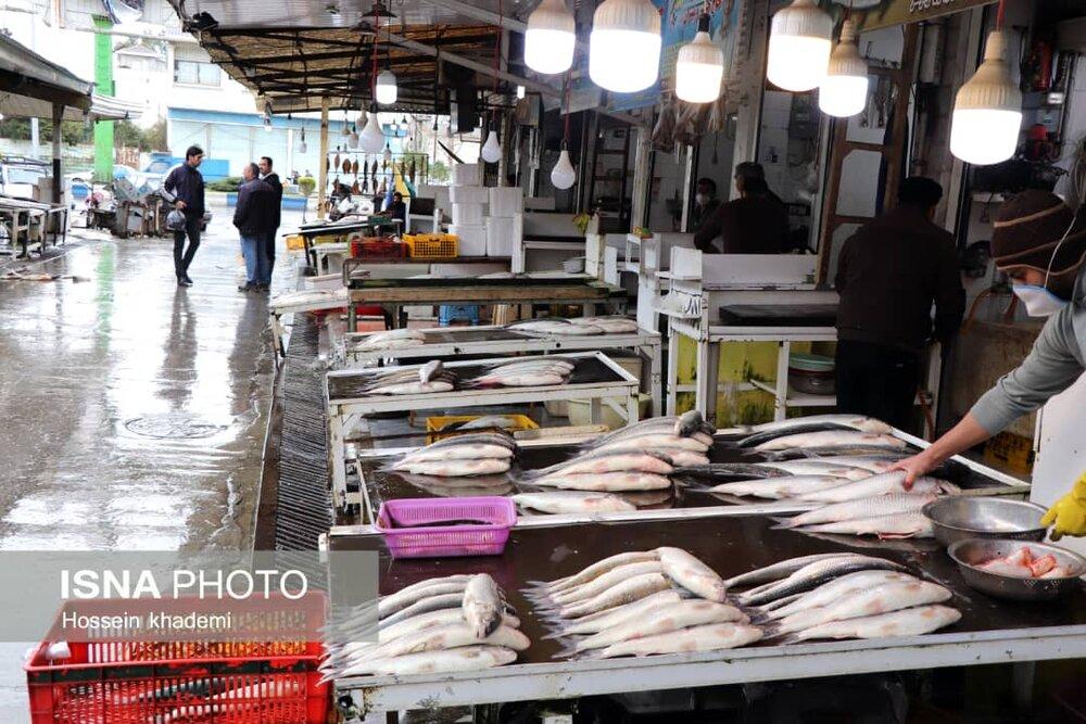 کم-رونقی-این-روزهای-بازار-ماهی-فریدونکنار.jpg