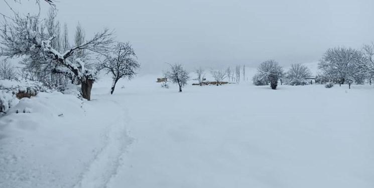 برف بهاری مناطق چهاردانگه را سفیدپوش کرد/ مسدود شدن راههای روستایی + تصاویر