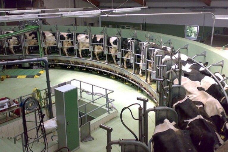 واحدهای لبنی شیر نمیخرند/ وضعیت نامطلوب دامداریهای مازندران