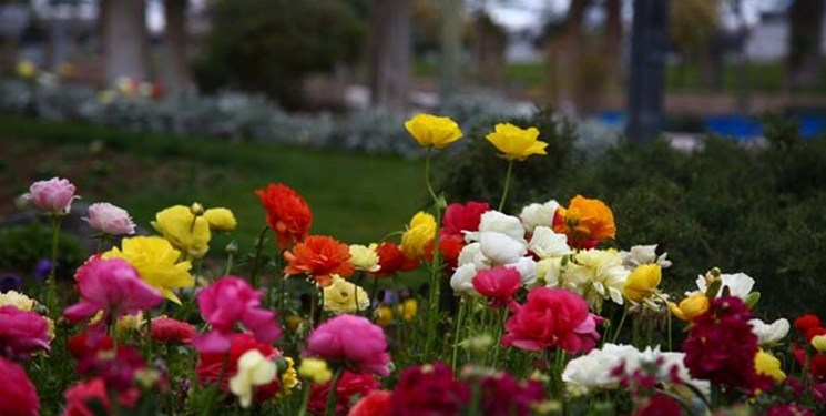 پرورش گل و گیاه در منزل برای فرار از روزهای کرونایی