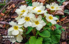 گیاهان دارویی شفابخش چهاردانگه - بخش اول