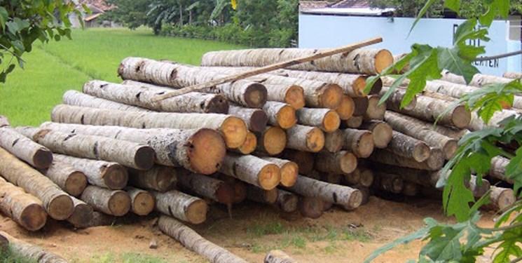 کشف بیش از 22 تن چوبآلات جنگلی قاچاق در شهرستان نور و نکا