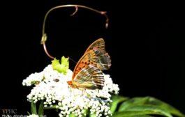 تصاویر زیبا از دودانگه ساری