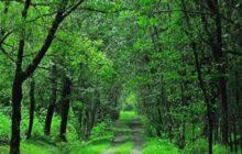 ماجراهای آق مشهد از دیروز تا امروز/ پیشینه وقف بخشی از جنگل ها