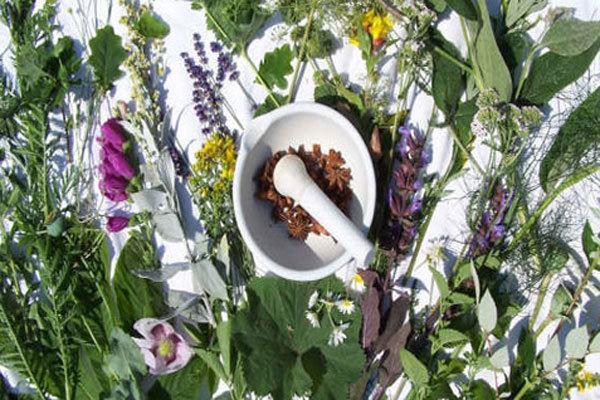 گیاهان شفابخشی که نشخوار چهارپایان می شود/ خطر انقراض گونه ها