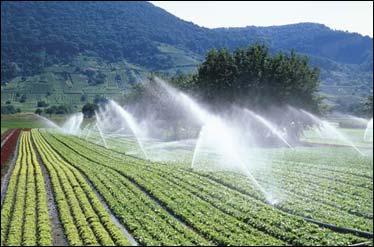 ضرورت اصلاح روش های آبیاری در بخش کشاورزی