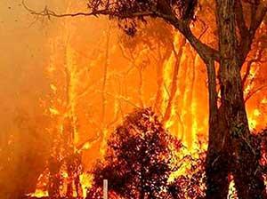 وقوع آتش سوزي مهيب جنگل در ارتفاعات چهارنو+ خبر تکمیلی