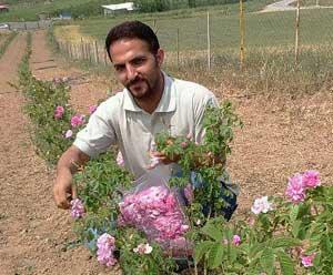 gol-mohammadi-thum