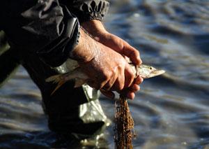 تصاویری از ماهیگیری در دریاچه الندان